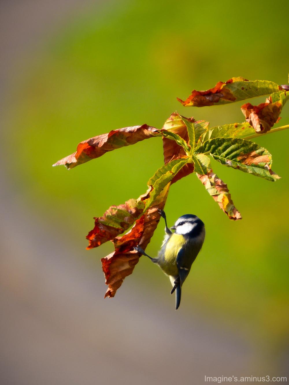 escalade d'automne..........................