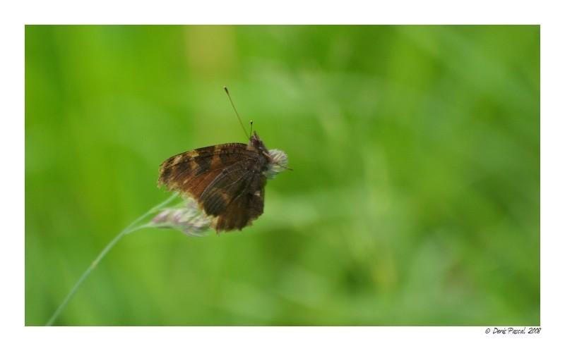 [ Papillon, ouvre moi tes ailes ]