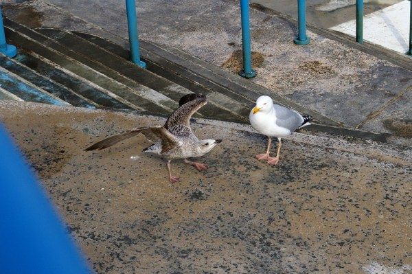 Jersey - Ses mouettes