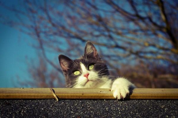 cat chat traitement croisé dreffeac