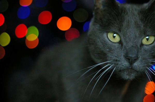 cat chat bokeh