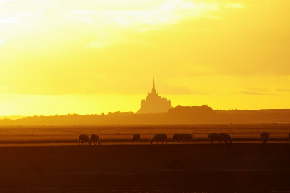 mont-saint-michel normandie ciel sunset moutons