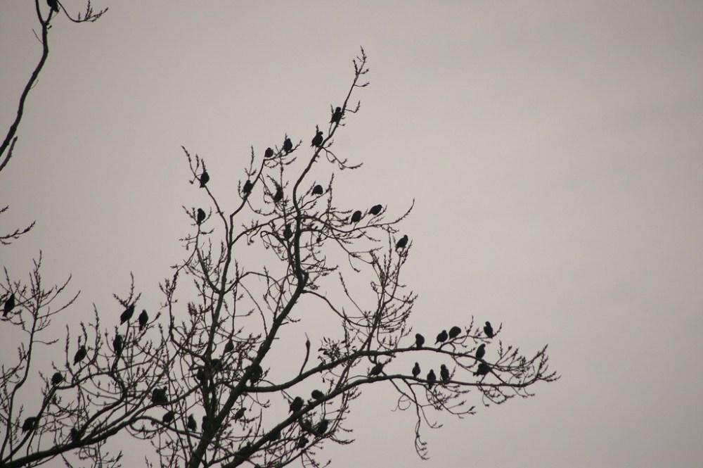 Grappe d'oiseaux