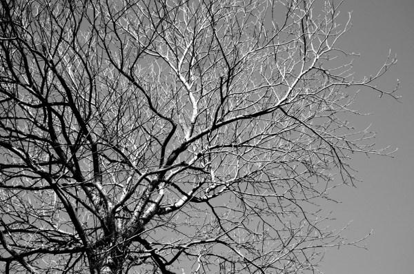 tree arbre
