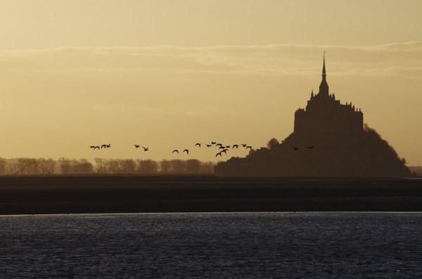 baie mont-saint-michel normandie bird