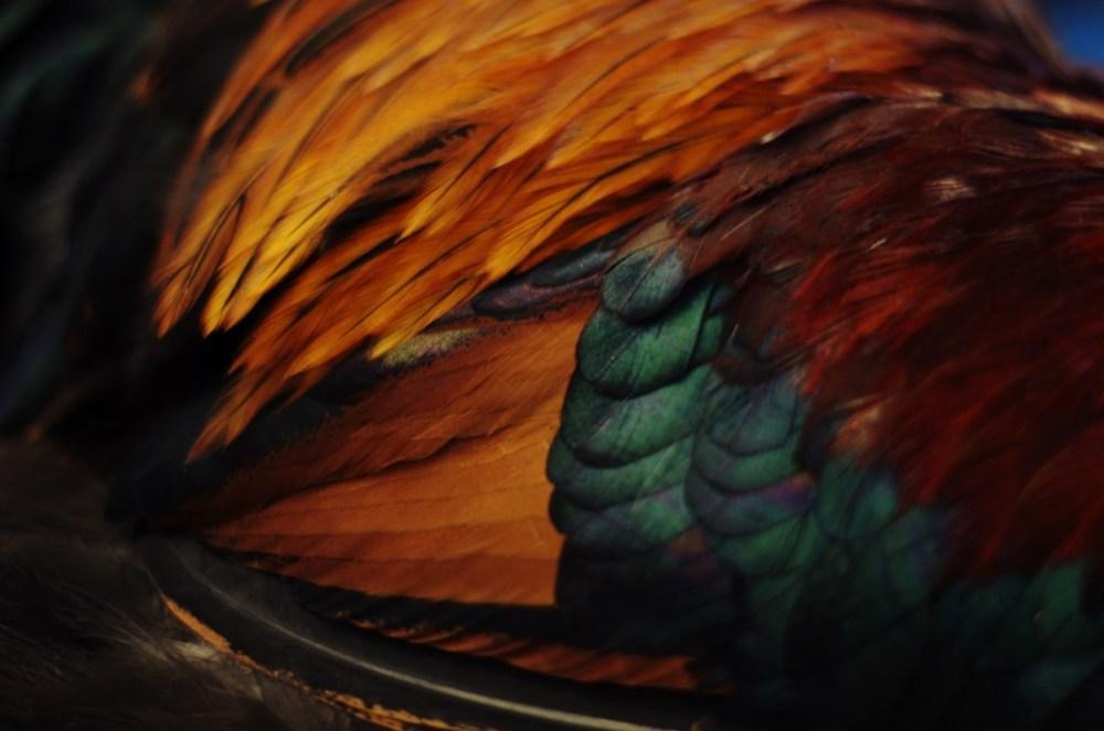 Saturday night feather