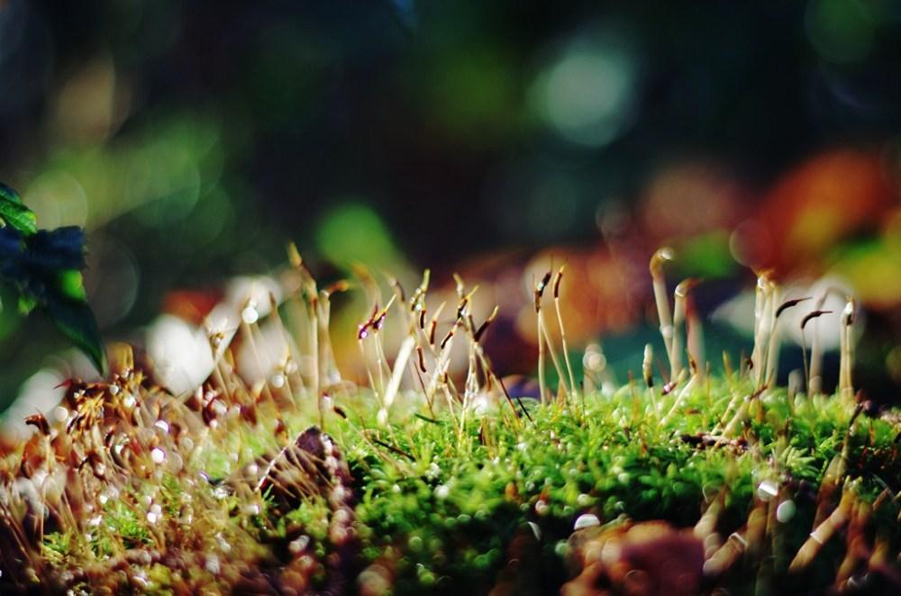 Souvenir de l'automne