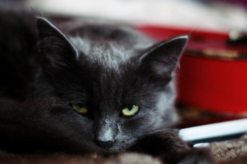 Le chat veille