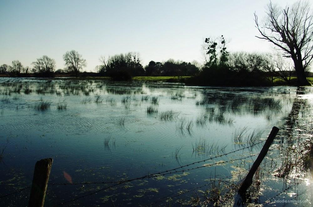 Champs d'eau et herbes folles