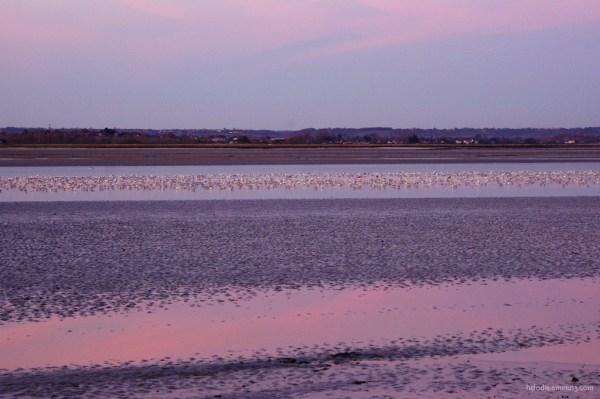 La Baie, les oiseaux, le soir