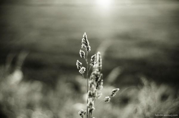 Pointe de soleil