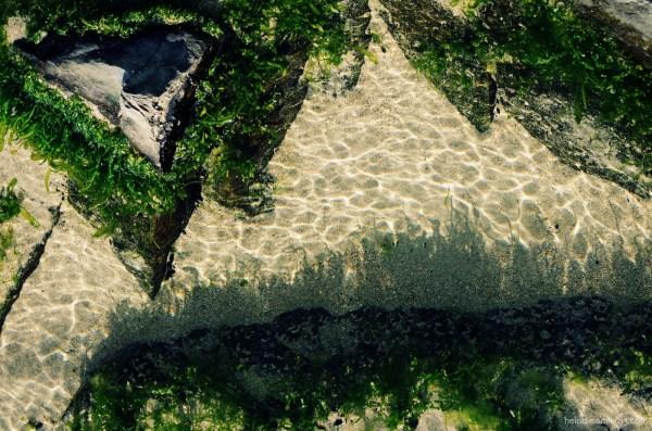 La danse des algues