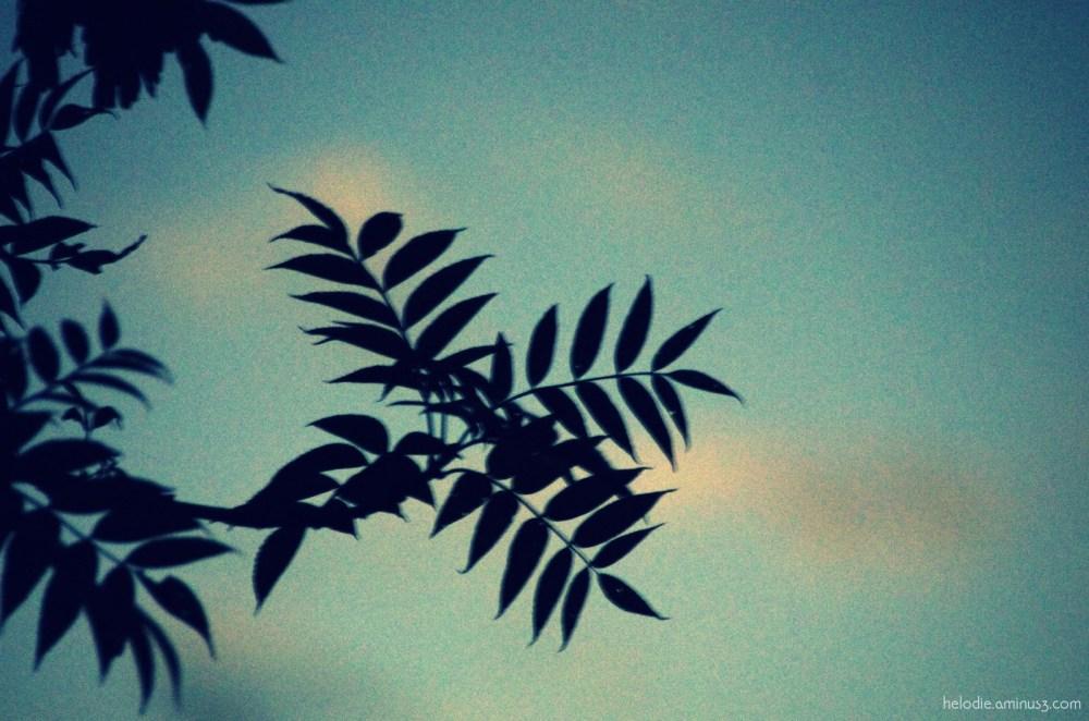 Jungle lotoise