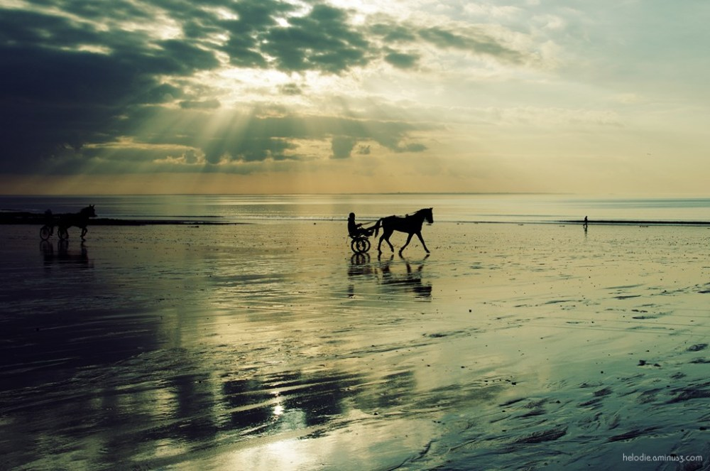 carolles normandie cheval horse plage sunset