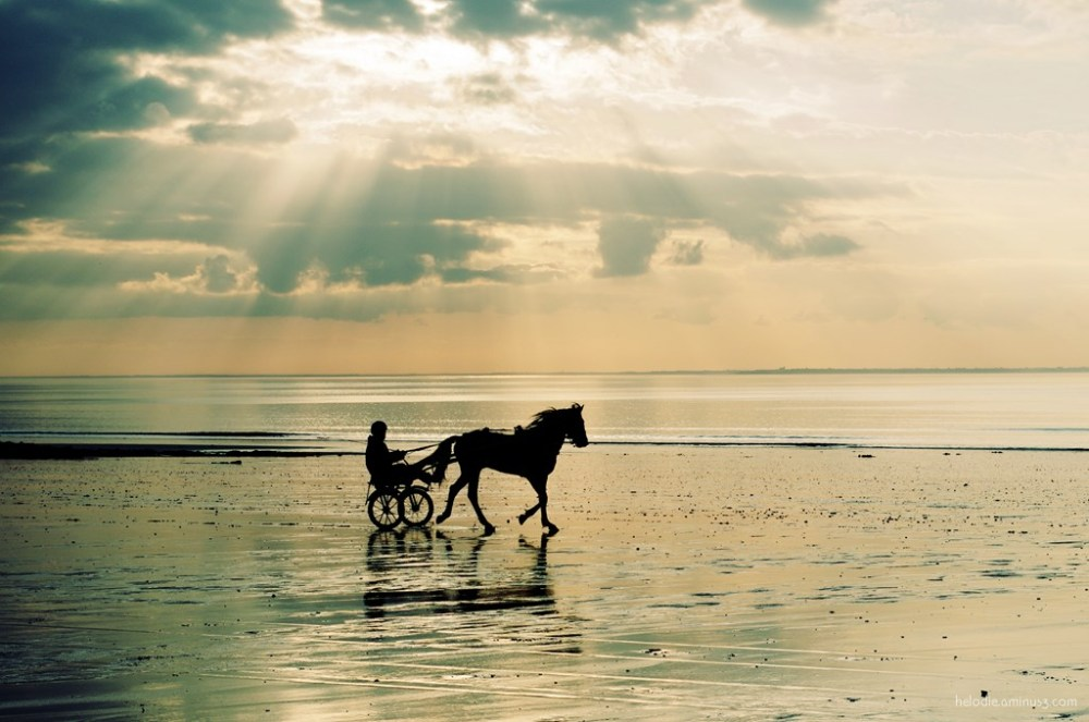 elodie hergoualch normandie cheval horse sunset