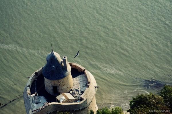 mont-saint-michel normandie mouette