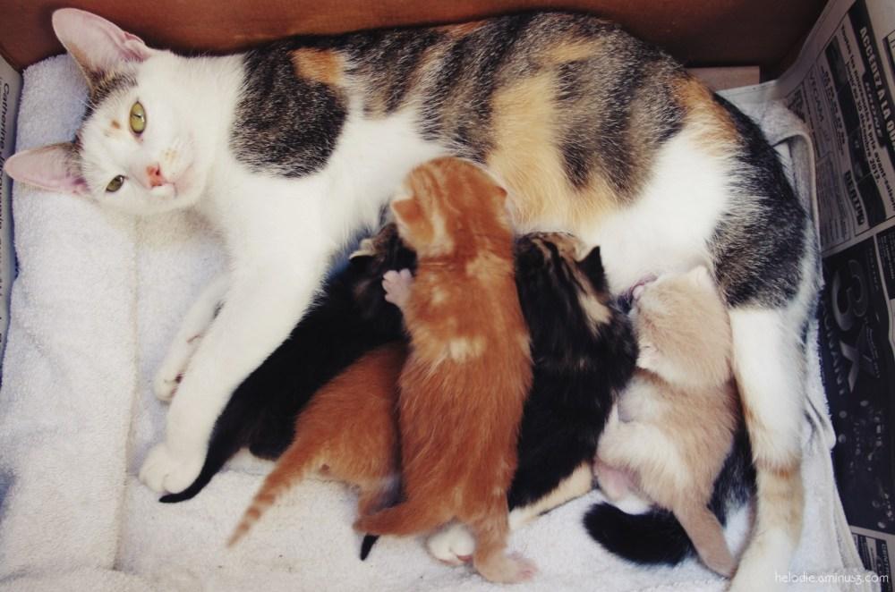 Mouchette et ses 5 chatons