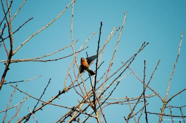 L'oiseau vole