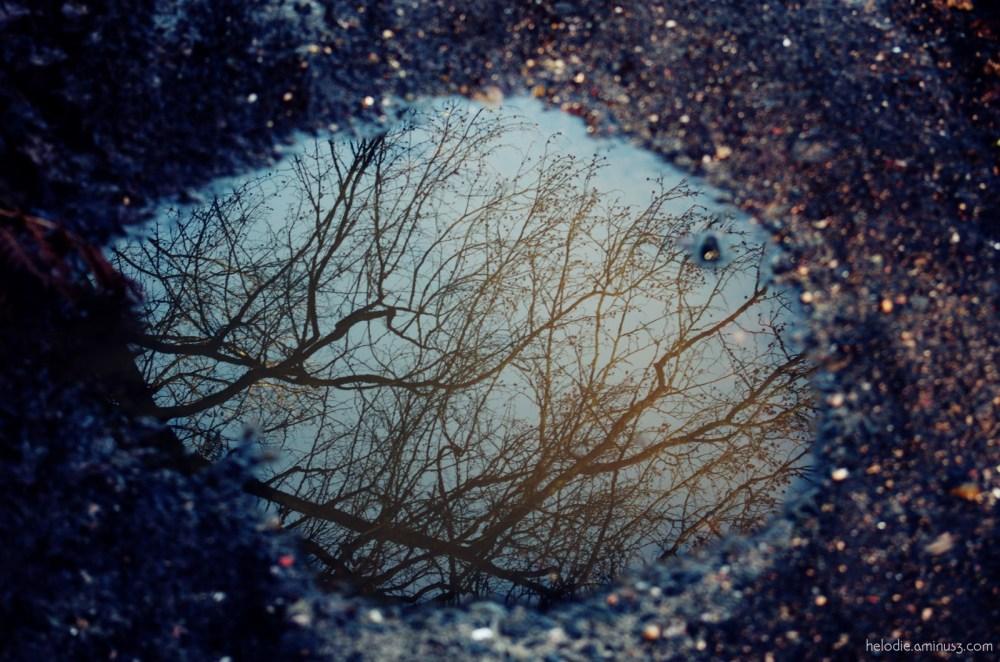 elodie hergoualch flaque foret reflet