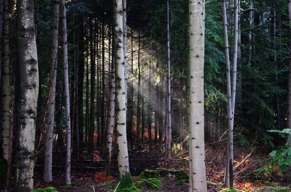 Forêt de lumière