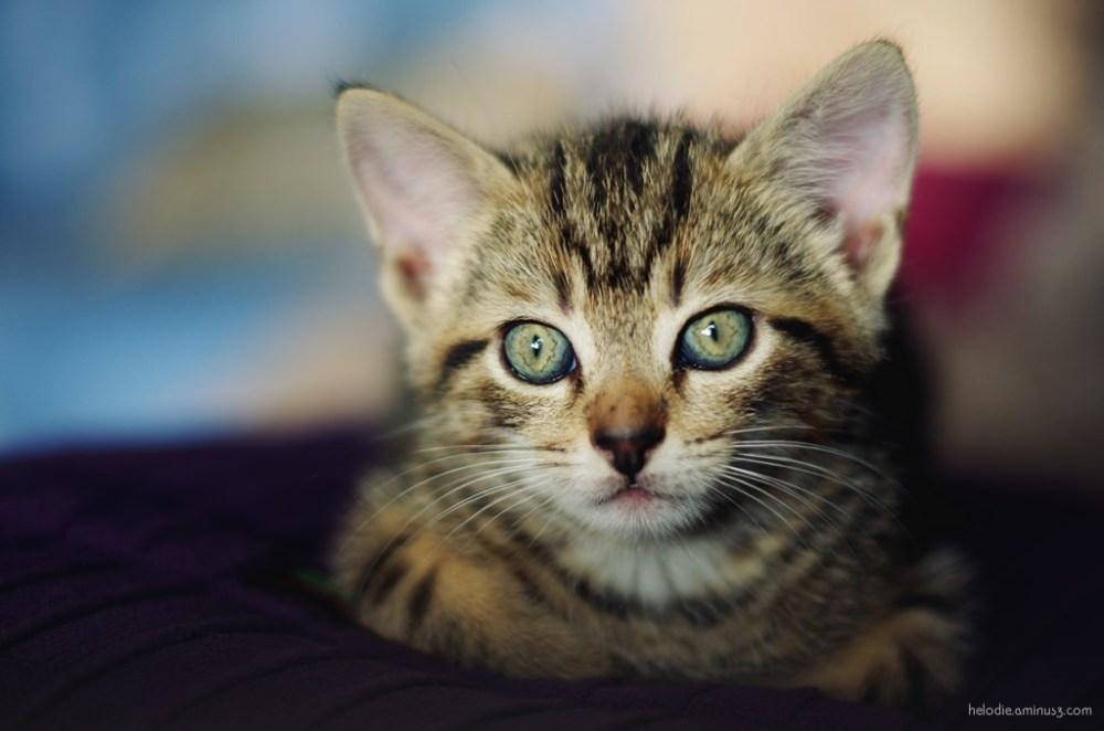 Raoul les beaux yeux