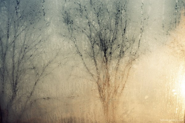 elodie hergoualch fenêtre buée arbre tree