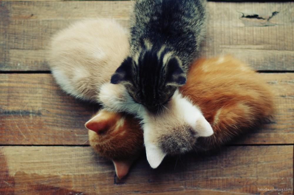Tas de chatons