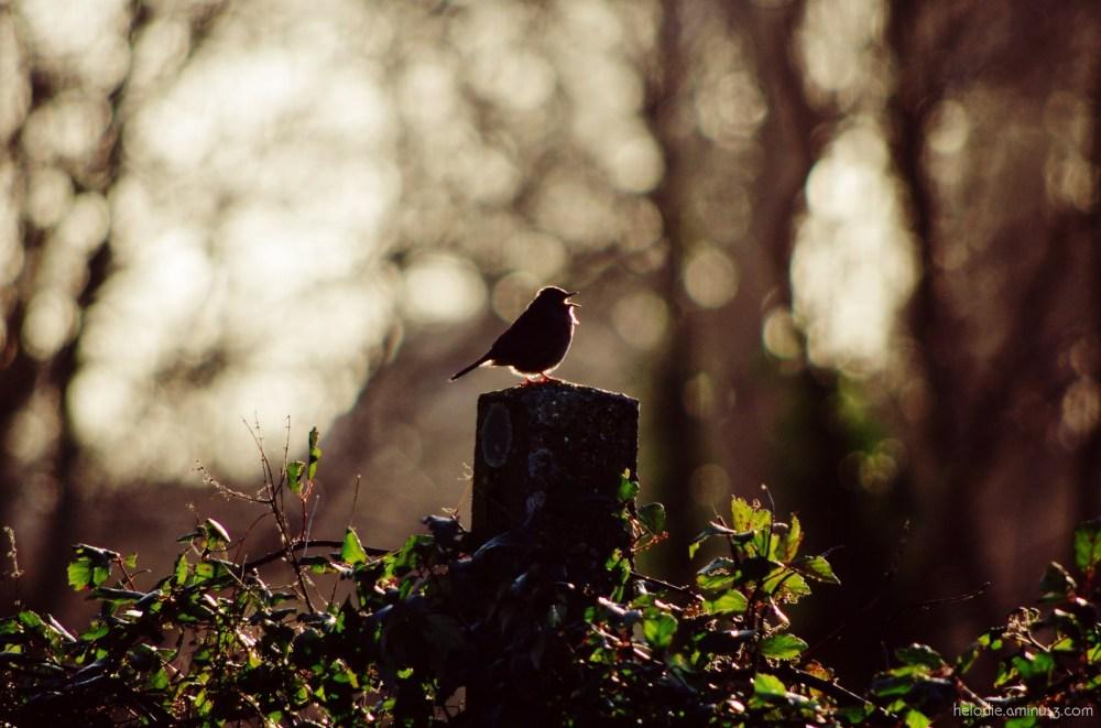 Le courage des oiseaux...
