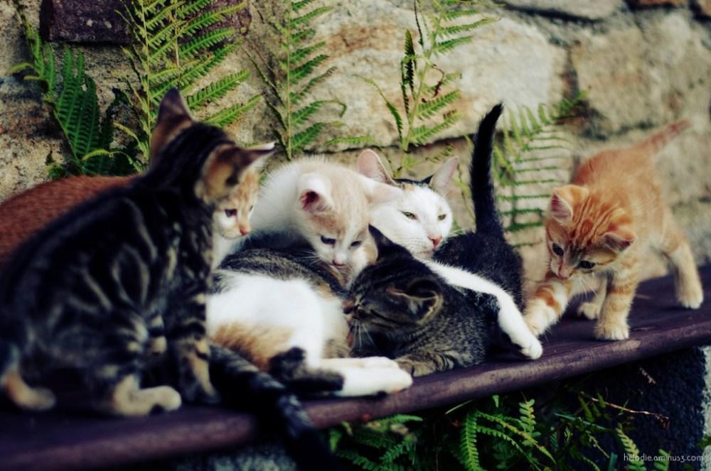 Mouchette family