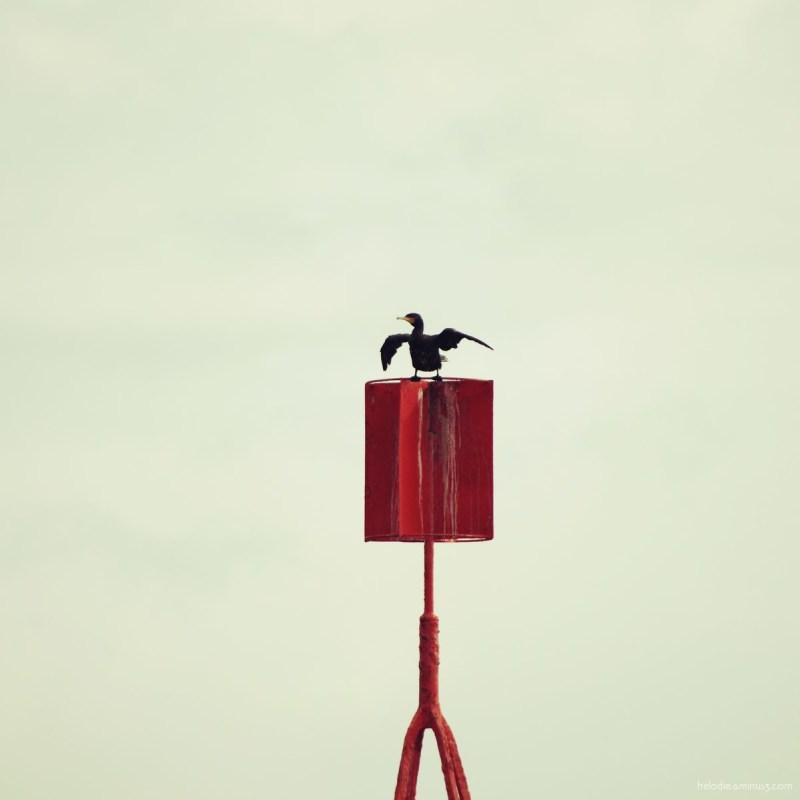 elodie hergoualch port-louis bretagne cormoran