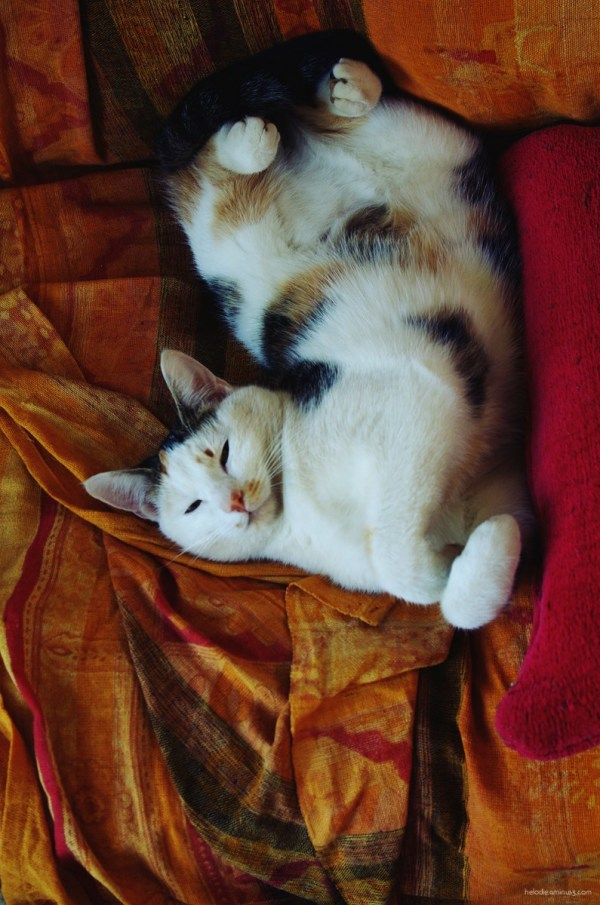 elodie hergoualch chat chat