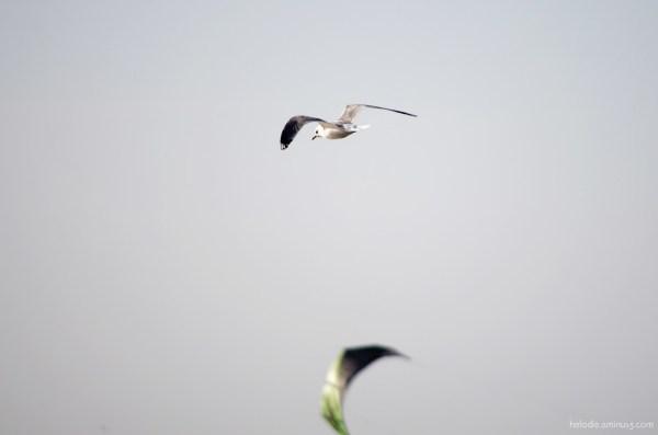 Les 3 ailes