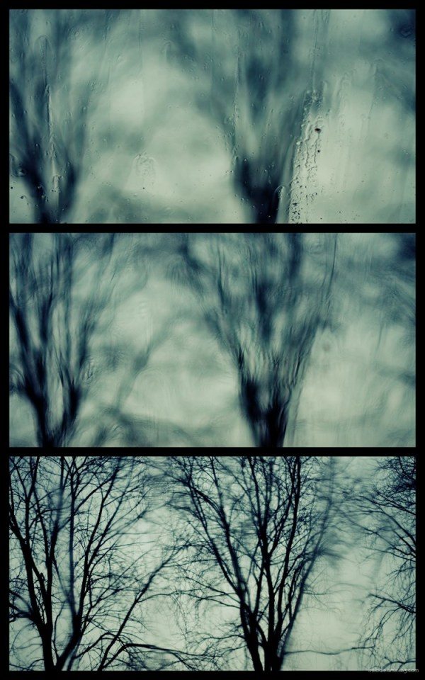 arbre pluie fenêtre elodie hergoualch