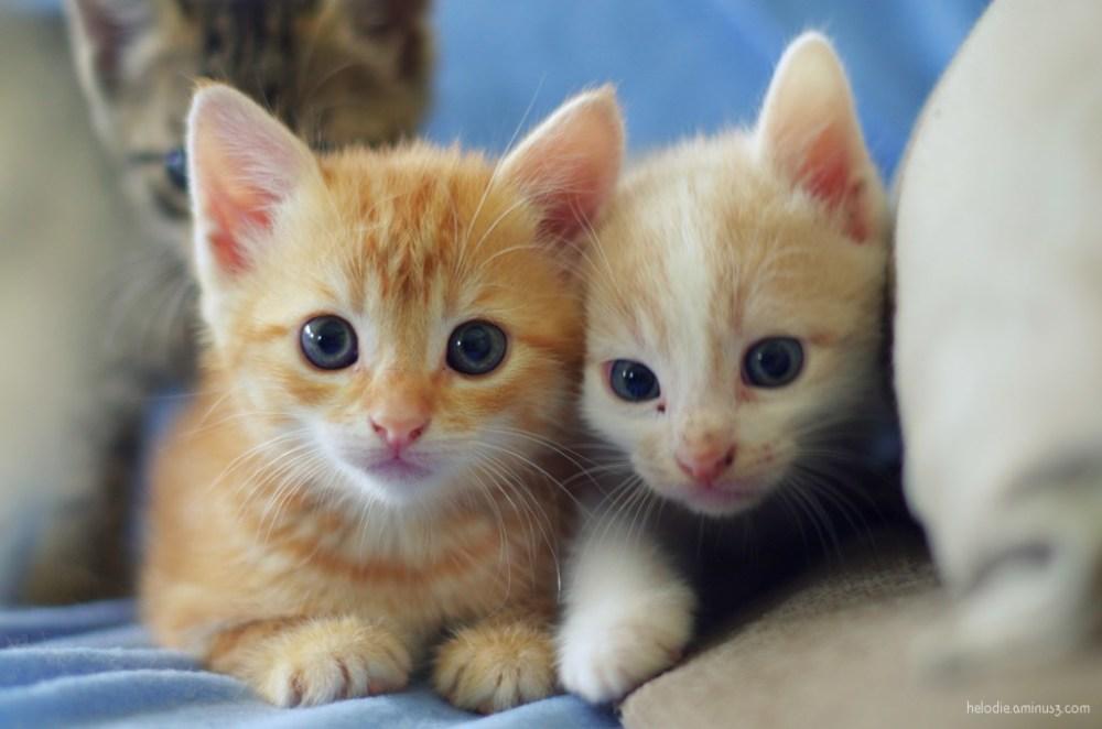 chatons kitten