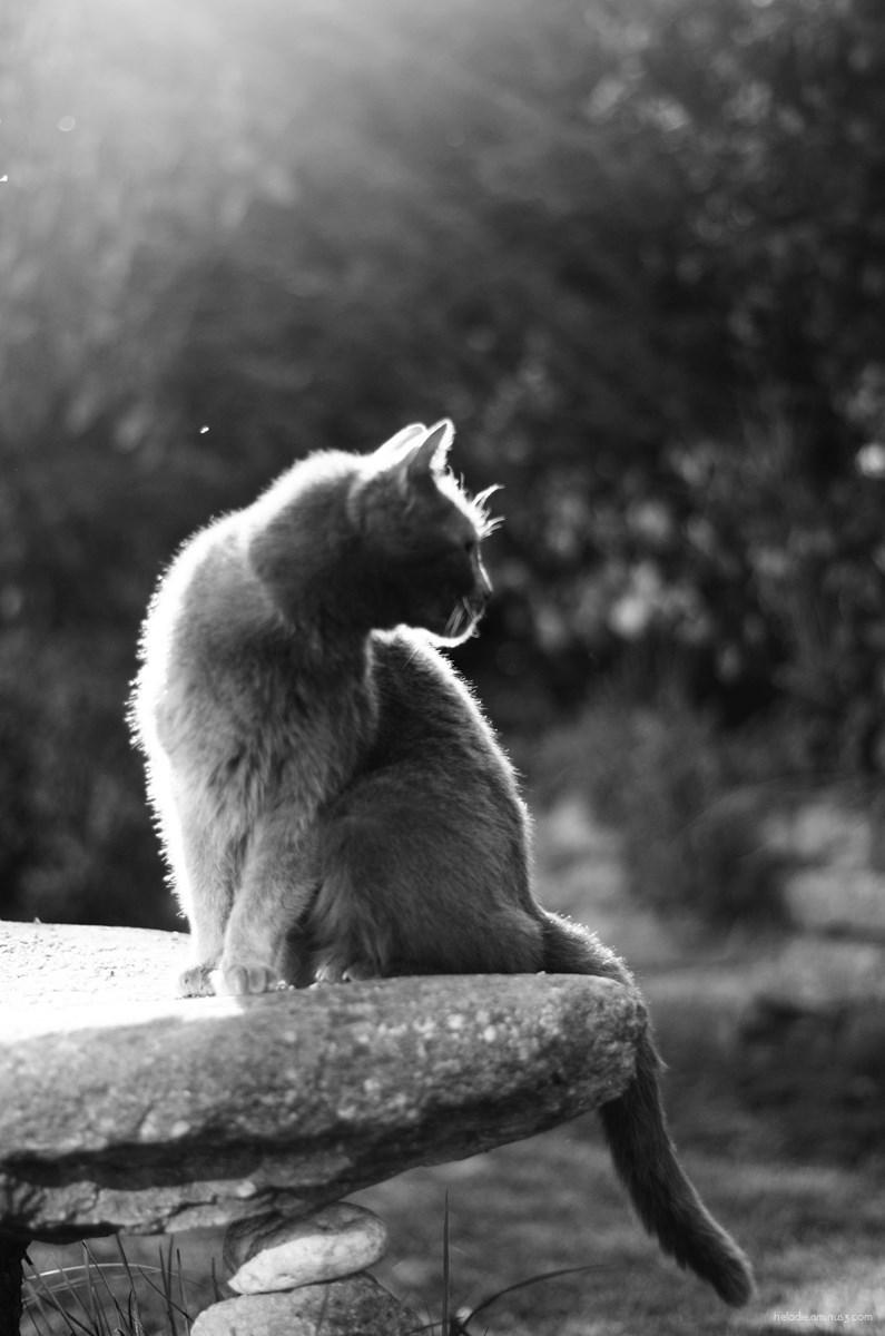 cat chat sur rocher light elodie hergoualch