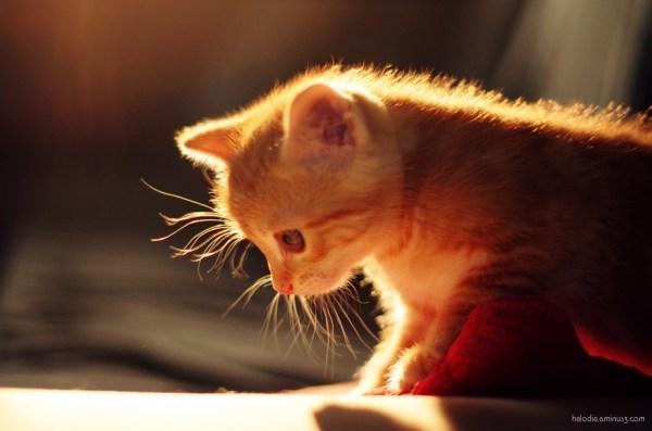elodie hergoualch cat chat chaton kitty