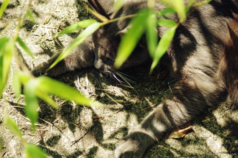 Vlad dans le bambou