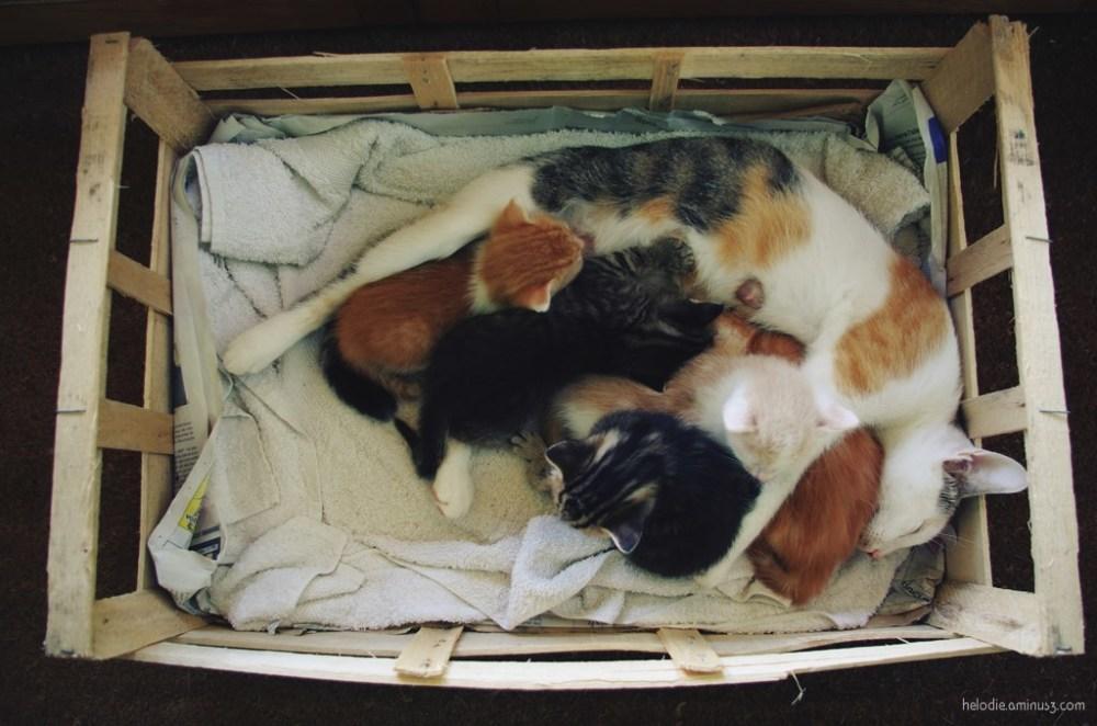 Cagette de chats
