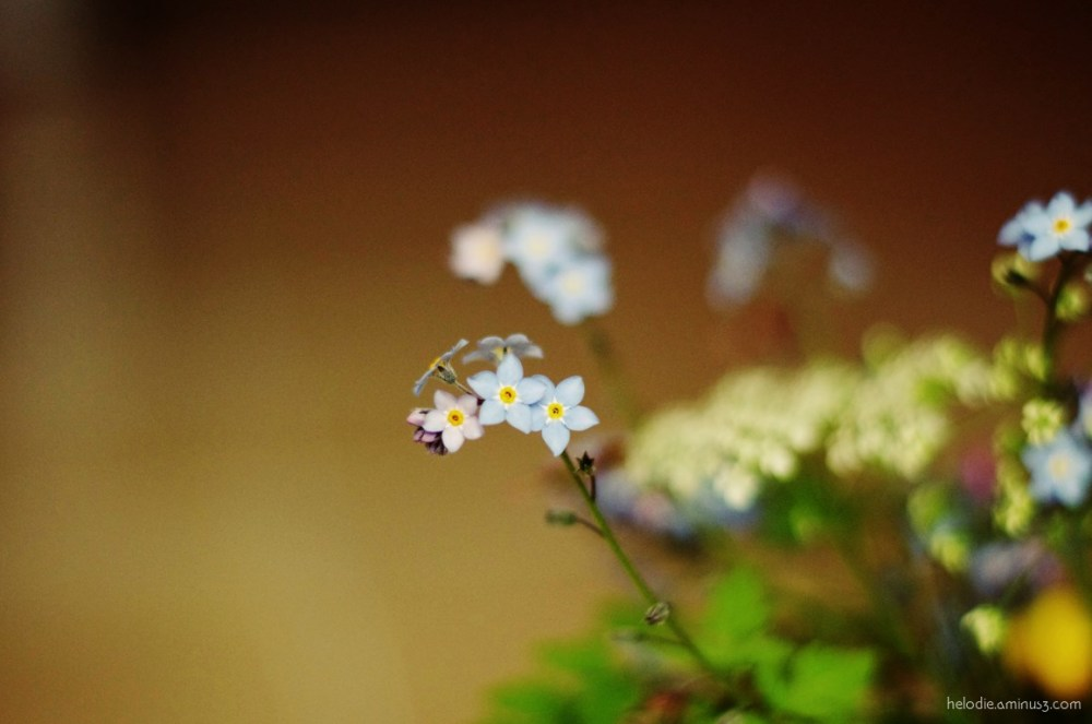Les petites fleurs du printemps