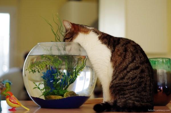 Le chat, le poisson, l'oiseau