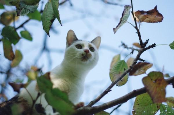 Mouchette dans le cerisier