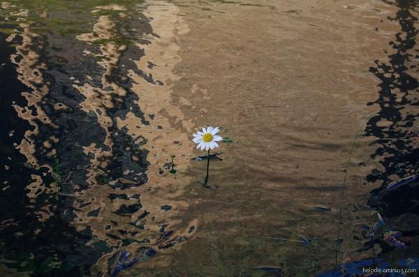 La petite fleur du cimetière innondé