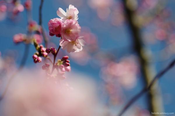 Souvenir du printemps