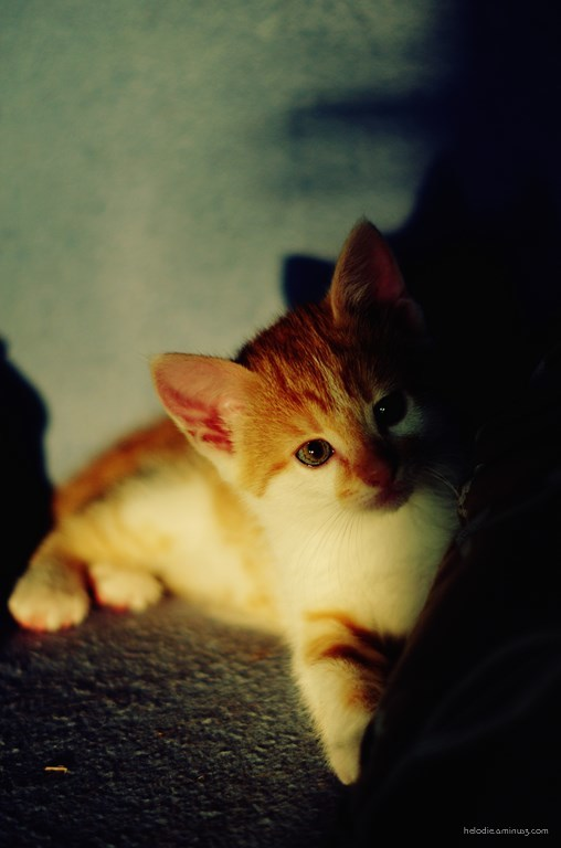 Souvenir des petits chats