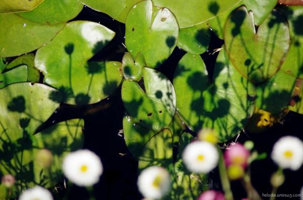 Les petites fleurs et leurs ombres