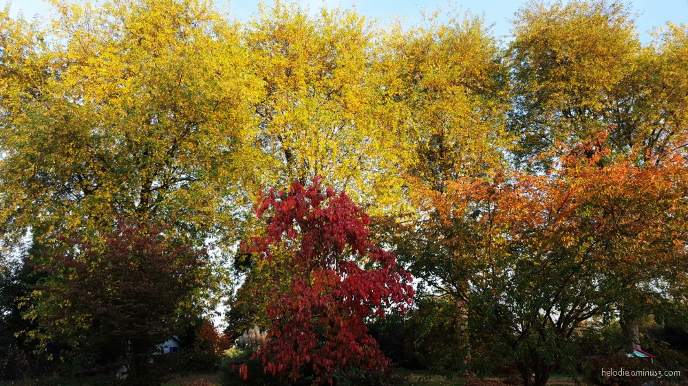 Feu d'automne