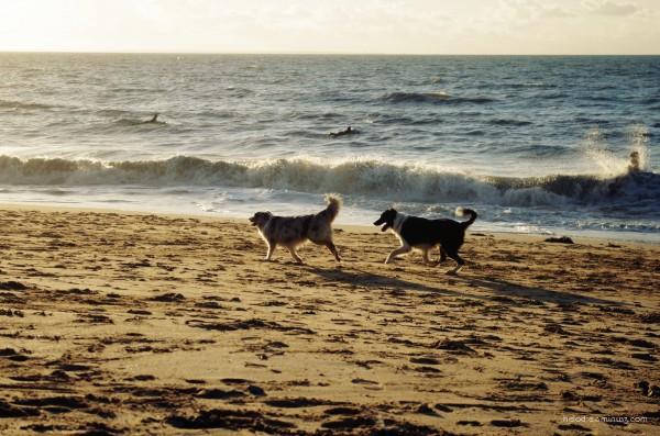 Les 2 chiens