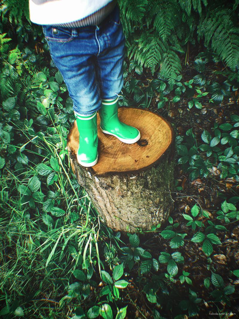 Deux bottes sur un tronc