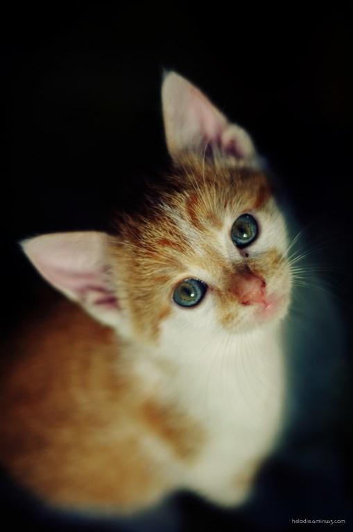 Souvenir des chatons
