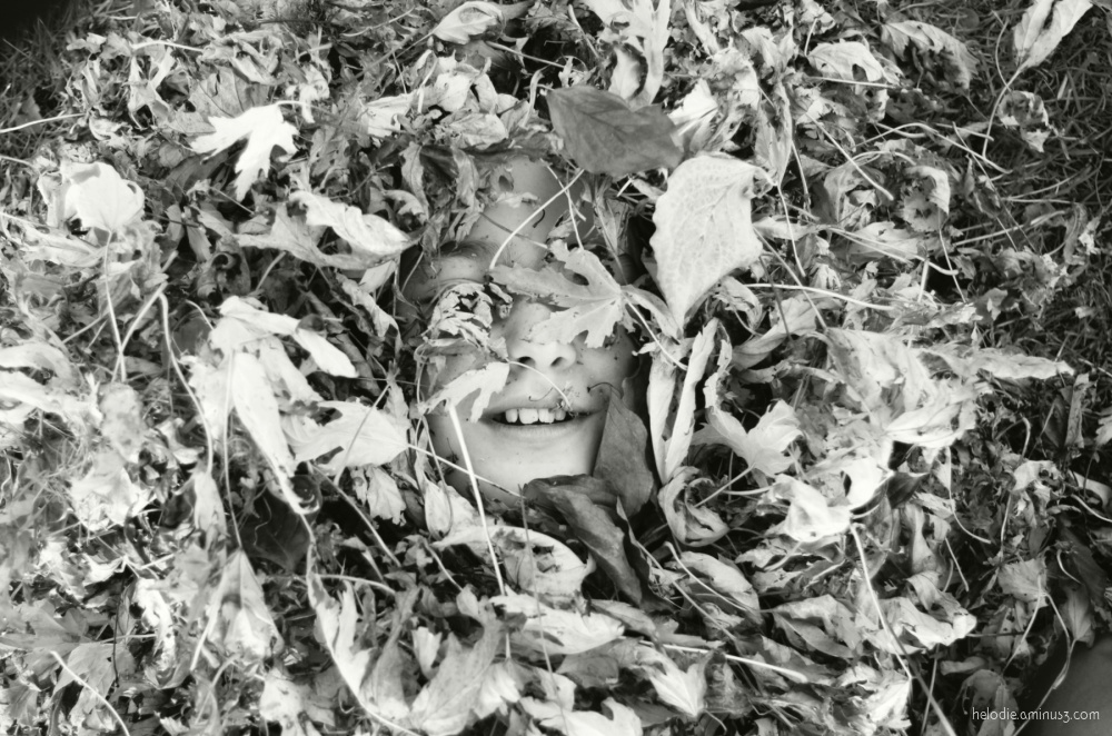 Dents de feuilles